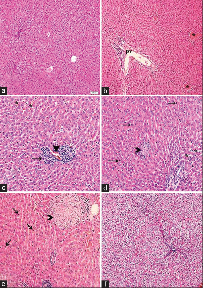 Figure 1: Liver histology (H and E): (a) Control untreated rats: normal liver tissue, ×100. (b) BME-treated rats: congested central veins (*) and portal vein branch, ×100. Cisplatin-treated rats (c-e): (c) sinusoidal (*) and portal vein branch (arrowhead) congestion, and moderate portal mononuclear cell infiltration (arrow), ×200. (d) Spotty necrosis (arrowhead), disorganization of the hepatic cords (*), hepatocytes with pyknotic nuclei (arrow), and Kupffer cell hyperplasia × 200. (e) A well-formed granuloma (arrowhead) and many pyknotic nuclei (arrows) ×200. (f) Cisplatin and BME co-treated rats. Improvement of all pathological changes, however, marked ballooning of hepatocytes is seen × 100