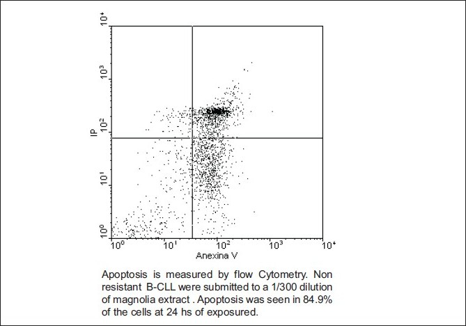 Figure 3: Apoptosis at 24 hs in non-resistant B-CLL cells induced by