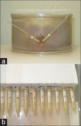 Figure 2: (a) Head phantom was included a Plexiglas cylinder with 20 cm inner diameter and 12 cm height, head bone and brachytherapy silicon applicator for nasopharynx cancer. (b) 11 calibration tubes were irradiated with doses in the range of 200-2000 cGy (0, 200, 400, 600, 800, 1000, 1200, 1400, 1600, 1800, 2000cGy) that numbered 1-10 (tube number 0 is not irradiated for 0 cGy)