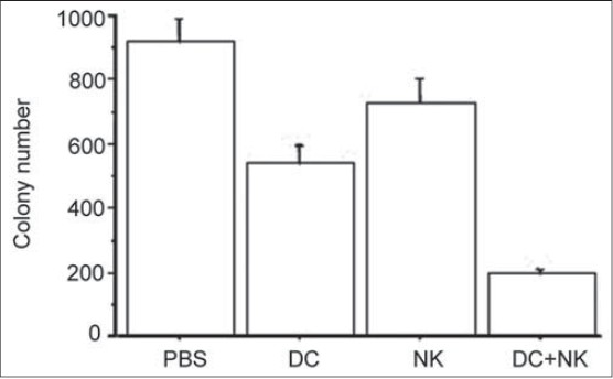 Figure 5: Inhibition of lung metastasis after DC and NK cell treatment. DCs for DC group, NK cells for NK group, combined DCs and NK cells for NK plus DC group and PBS for the control group were respectively