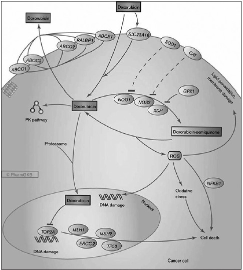 An Overview Of Doxorubicin Formulations In Cancer Therapy Rivankar S J Can Res Ther