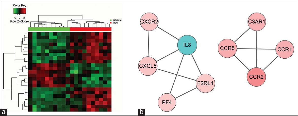 "Figure 4: Heat map of gene ontology (GO):0060326/cell chemotaxis (a) and corresponding biological network (b). (a) Heat map of hierarchical clustering of all datasets (10 normal samples and 10 hepatocellular cancer (HCC) samples) using differentially expressed genes (DEGs) in ""cell chemotaxis."" ""Red"" indicates high relative expression, and ""green"" indicates low relative expression. (b) Biological network was constructed according to the direct connections among DEGs"